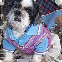 Adopt A Pet :: Oreo - Mays Landing, NJ