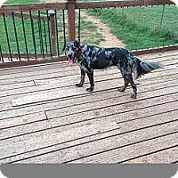 Adopt A Pet :: Julie - Conway, AR