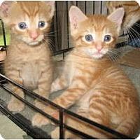 Adopt A Pet :: Dewey & Lewey - Acme, PA