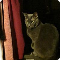 Adopt A Pet :: Misty - Kelso/Longview, WA