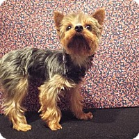 Adopt A Pet :: Echo - Murphy, NC