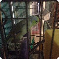 Adopt A Pet :: Kyri - St. Louis, MO