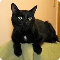 Adopt A Pet :: Shadow - Milford, MA