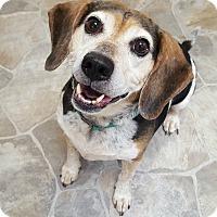 Adopt A Pet :: Sally - Fennville, MI