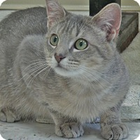 Adopt A Pet :: Petey - Chambersburg, PA