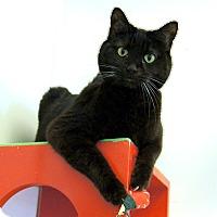 Adopt A Pet :: Croi - Colorado Springs, CO