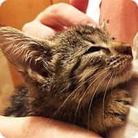 Adopt A Pet :: Nita - N. Billerica, MA