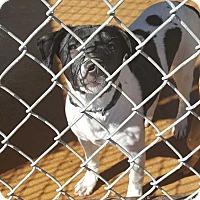 Adopt A Pet :: Maggie - Crosbyton, TX