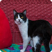 Adopt A Pet :: Jitterbug - Fountain Hills, AZ