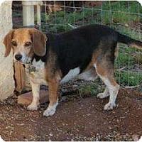 Adopt A Pet :: Sparky Lyle - Phoenix, AZ