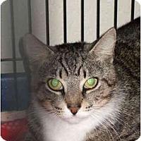 Adopt A Pet :: Pepper - Fort Lauderdale, FL