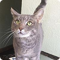 Adopt A Pet :: Silas - St. Petersburg, FL