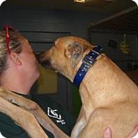 Adopt A Pet :: Braska Mister - Knoxville, TN