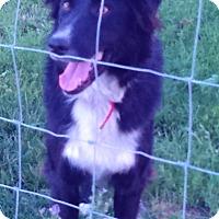 Adopt A Pet :: BILLY - Nampa, ID