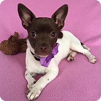 Adopt A Pet :: Payton - North Brunswick, NJ