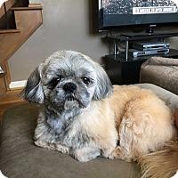 Adopt A Pet :: Cupid - Beachwood, OH
