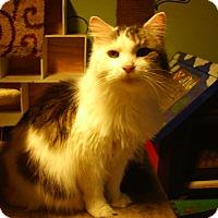 Adopt A Pet :: Riley - Bridgeton, MO