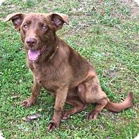 Adopt A Pet :: Rixey - Manchester, NH