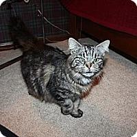Adopt A Pet :: Tori - Xenia, OH