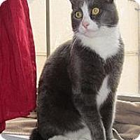 Adopt A Pet :: Oliver (MC) - Little Falls, NJ