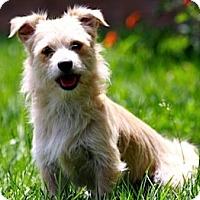 Adopt A Pet :: SLADE - Mission Viejo, CA