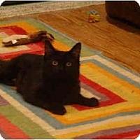 Adopt A Pet :: Myra - Muncie, IN
