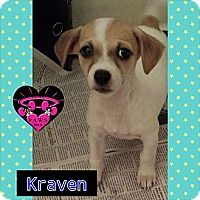 Adopt A Pet :: Kraven - Fowler, CA