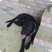 Adopt A Pet :: Bella - Franklin, TN