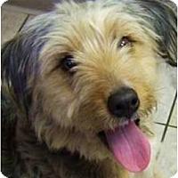 Adopt A Pet :: Cosmo - Beachwood, OH