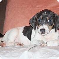 Adopt A Pet :: Zane - Homewood, AL