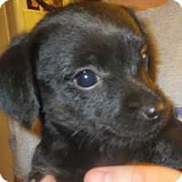 Adopt A Pet :: Sally - Greenville, RI