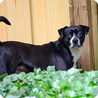 Adopt A Pet :: MANNY - North Augusta, SC