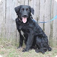Dalmatian/Cockapoo Mix Dog for adoption in Newcastle, Oklahoma - Galinda