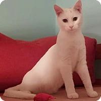 Adopt A Pet :: Keanu - Merrifield, VA