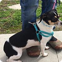 Adopt A Pet :: Deb Deb - Long Beach, CA