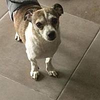 Adopt A Pet :: Dexter - Pompano beach, FL