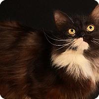 Adopt A Pet :: PHOEBE - Pegram, TN