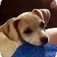 Adopt A Pet :: Princess Diana - Shawnee Mission, KS