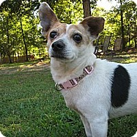 Adopt A Pet :: Princess - Thomasville, NC