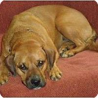 Adopt A Pet :: Luna 100$ reduction - P, ME