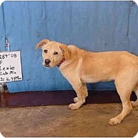 Adopt A Pet :: Lexie/Adopted! - Zanesville, OH