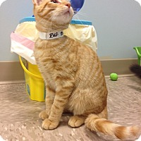 Adopt A Pet :: Rolf - Byron Center, MI