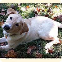 Adopt A Pet :: Gomer - Plainfield, CT
