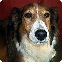 Adopt A Pet :: Harley (WV) - Alderson, WV