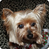 Adopt A Pet :: Baylee - Statewide and National, TX
