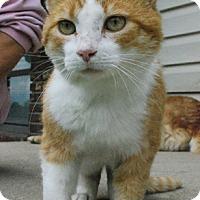 Adopt A Pet :: Ruben - Columbus, OH
