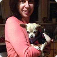 Adopt A Pet :: Gracie - Mount Kisco, NY
