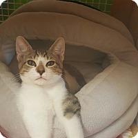 Adopt A Pet :: BENNY - Brea, CA