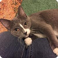 Adopt A Pet :: Jenny - Barrington, NJ