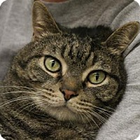 Adopt A Pet :: Igby - West Des Moines, IA